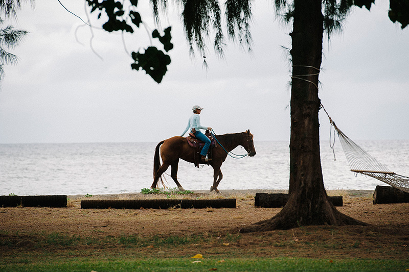 A Horse On The Beach in Waimea, Kauai.  What You Can Expect to See While Staying at The Waimea Plantation Cottages, Kauai.   Quintessential Kauai!